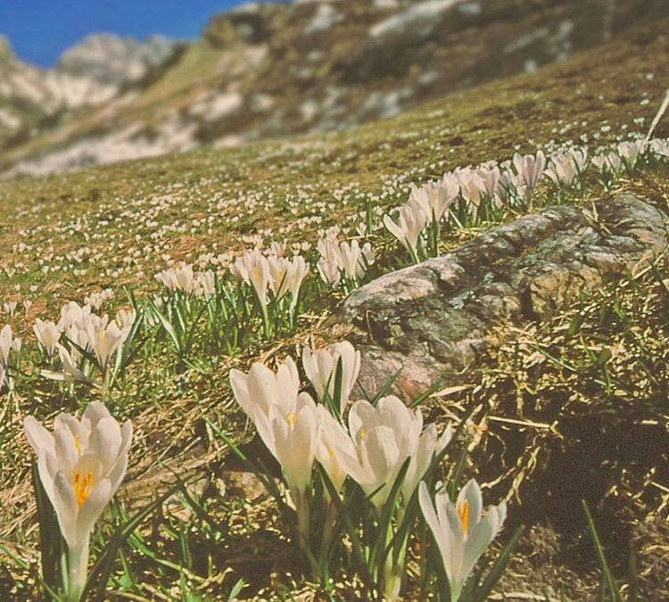 Frühling in den Bergen…