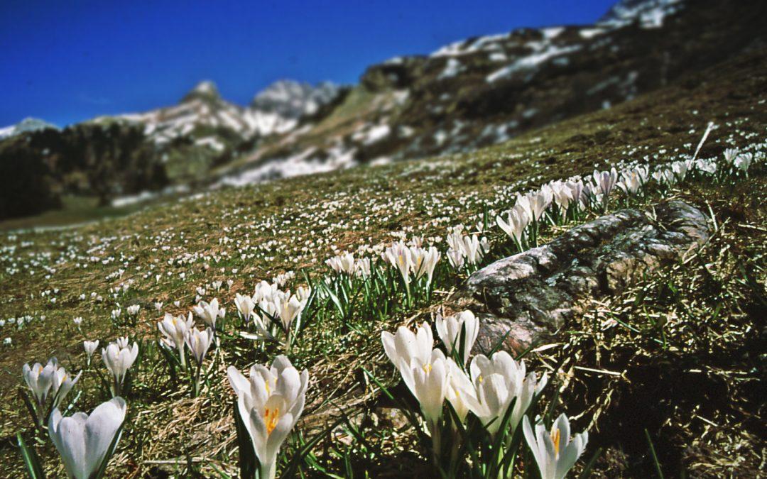 Frühlingserwachen in Oberstdorf